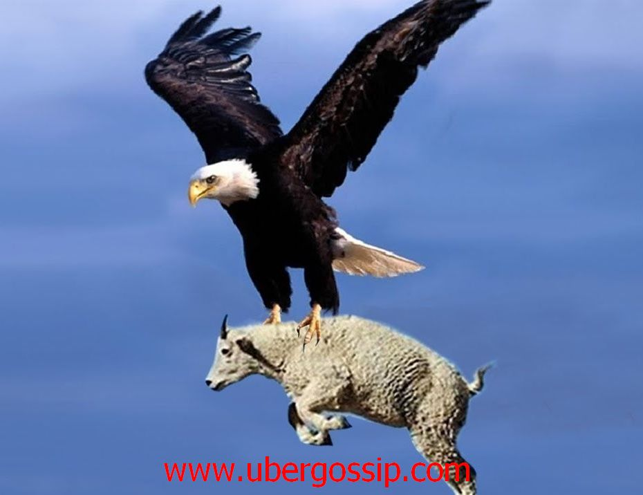 Eagle, Golden eagle, gable eagle, harpy eagle, eagle hunting, black eagle, haste eagle, sea eagle, flying eagle, Biggest eagle, eagle owl