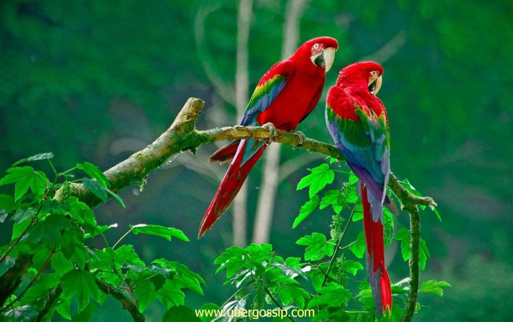 parrot, talking parrot, macaw parrot, grey parrot, african grey parrot, green parrot, sun conure, raw parrot, hyacinth macaw, amazon parrot
