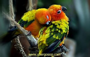 parrot, talking parrot, macaw parrot, grey parrot, african grey parrot, green parrot, sun conure, raw parrot, hyacinth macaw, amazon parrot