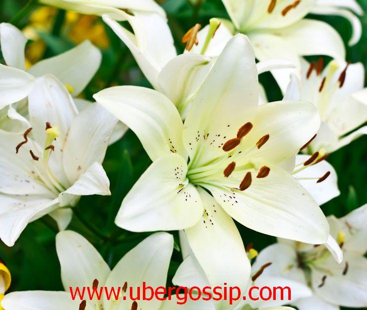 Flowers, beautiful flowers, rose flower, tulip, paper flowers, bouquet, flower bouquet, jasmine flower, lily flower, chrysanthemum, red flowers